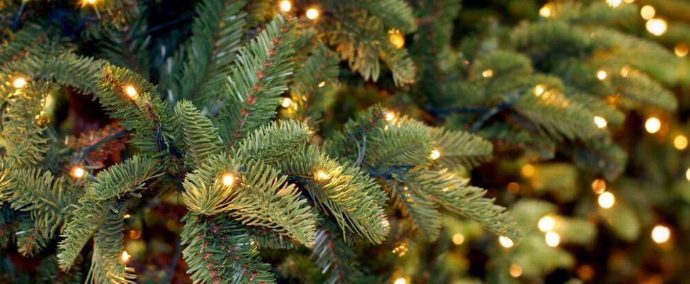 Tuincentrum Tuin! in Leeuwarden en Zwaagwesteinde | Kerstbomen | Kerstboom kopen