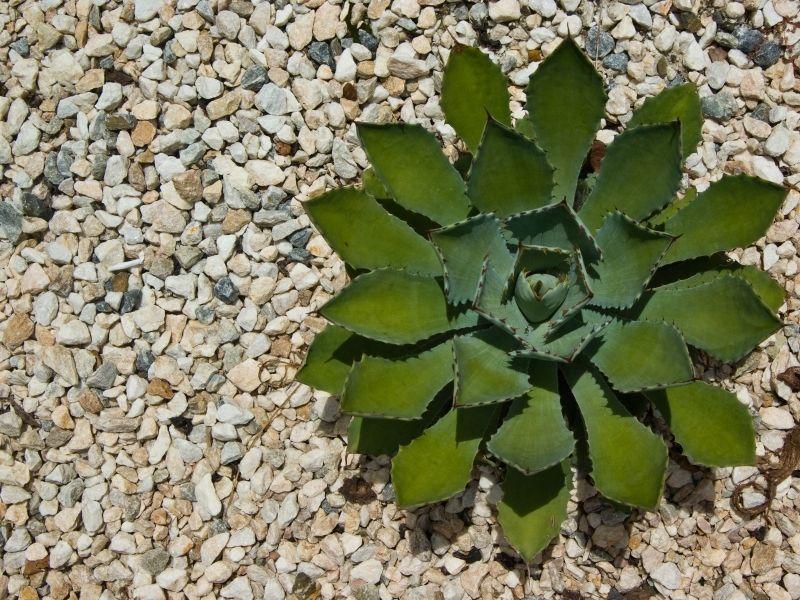 Grind In Tuin : Grind tuintips tuincentrum tuin in leeuwarden en zwaagwesteinde