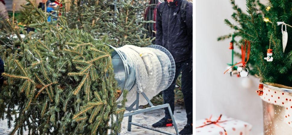 Tuincentrum Tuin! in Leeuwarden en Zwaagwesteinde | Kerstartikelen | Kerstshow